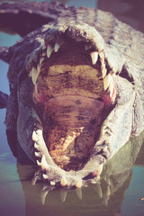 Crocodile  with filter effect retro vintage style