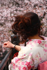 Japanese girl looking at blossoming cherry in Kyoto