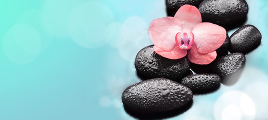 Flower orchid and stones. Spa concept.
