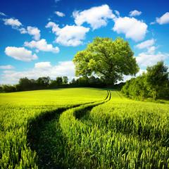 Idyllische ländliche Natur