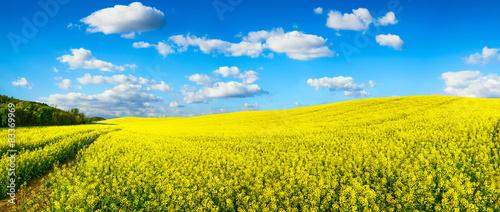 Keuken foto achterwand Geel Blühendes Rapsfeld Panorama