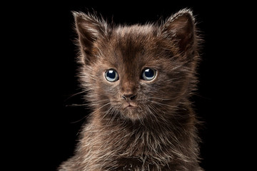 Little black kitten isolated on black background, close up