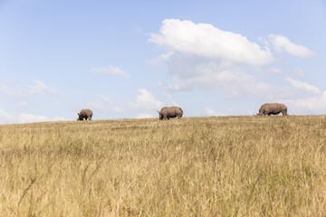 Rhino's Landscape