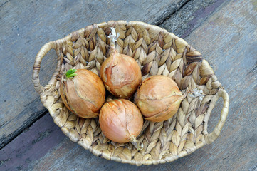 Onions in a basket on a wooden floor