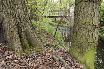 tree trunks in the background Bridge
