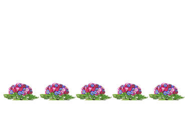 Bouquets of colorful flowers on a white background