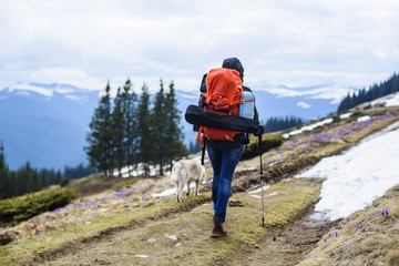 woman hiking with sled dog in mountains