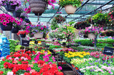 Fototapety Flower market
