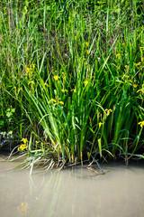 Riva di canale, fiume, corso d'acqua e piante