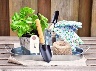 Herb garden. Basil and gardening tools.