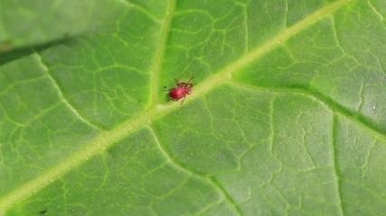 bug sitting on a green leaf