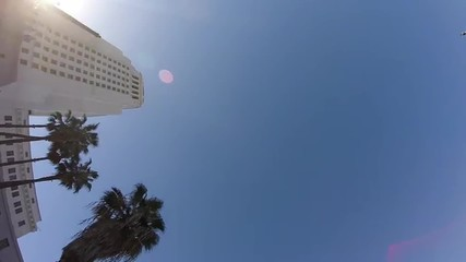 Los Angeles City Hall and Palm Trees