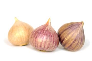 Solo garlic on white background