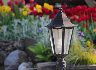 Decorative street lantern and bright tulips on a bed