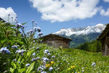 Almhütte in der sommerlichen Blumenwiese