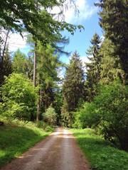 Waldweg im Deister, Niedersachsen