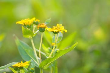 closeup of a yellow farm plant