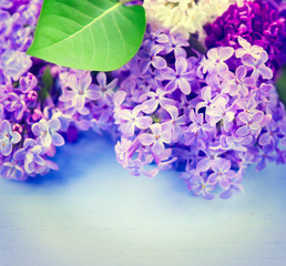 Lilac flowers bunch over blue wooden background