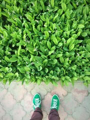 Green field and green shoes