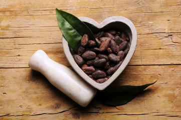 Theobroma cacao カカオ Какао Cacau 可可樹 كاكاو