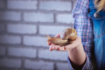 big snail on the hand