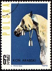 Arabian horse on post stamp