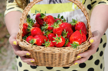 woman holding basket with strawberry