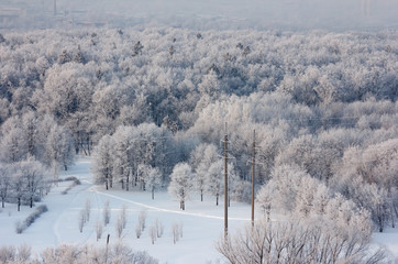 Top view of a park covered with frost in winter morning