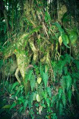 Close-up roots and green plant life in tropical rain forest