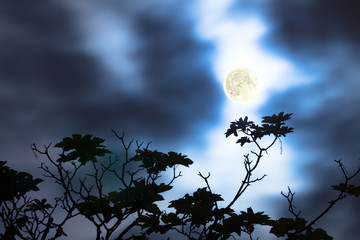 Moon on a cloudy sky with defocused tree silhouette.