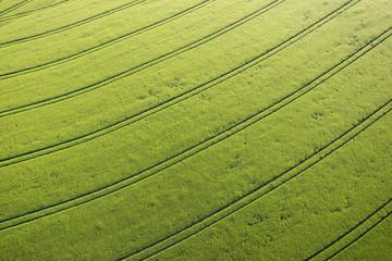 Luftaufnahme, Getreidefeld