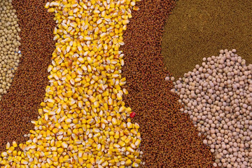 Various Agricultural Crop Seed