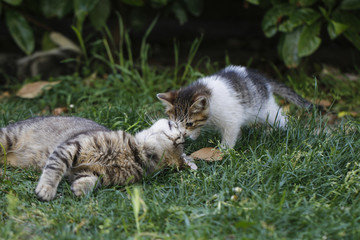 Mother cat and her kitten.