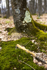 Closeup of  tree with moss on roots
