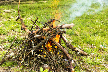 tree branches burning in spring