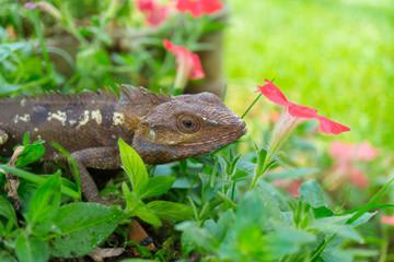 Tree lizard with flowers