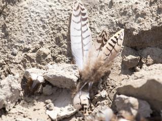 bird feathers on the ground
