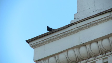 Pigeons on building's ledge with ornament
