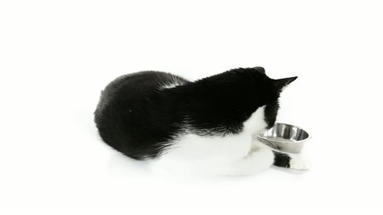 Black and white cat waiting with a bowl for food