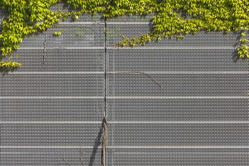 Hintergrund mit Efeu © Matthias Buehner
