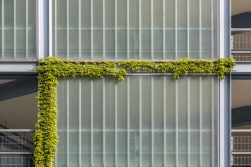Efeu am Gebäude © Matthias Buehner