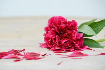 Pfingstrose als dekoratives Blumenarrangement