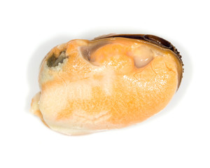 mussel on a white background