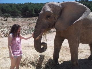 Mi amigo elefante