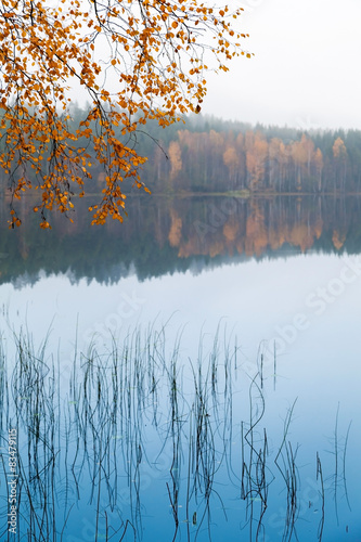 Panel Szklany Autumn yellow birch leaves over still lake water