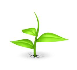 Samen gedeiht auf weiss