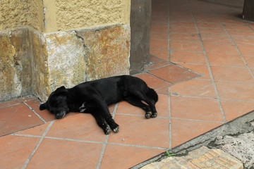 Sleeping black dog in Cuenca, Ecuador