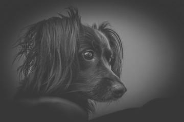 Lindo modelo de Cachorro