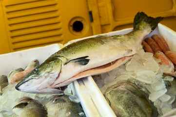 Big Fish for Sale in Brazilian Market
