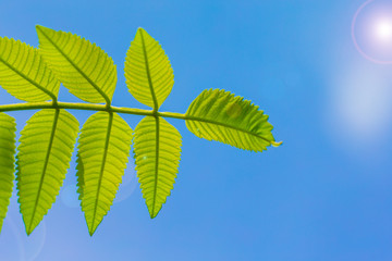 Green leaf with blue sky